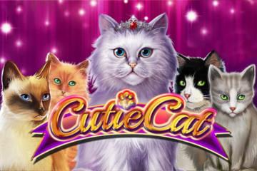 Cutie Cat slot Gamomat