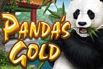 Pandas Golds