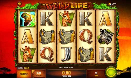 The Wild Life free slot